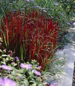Mediterraner Garten Winterhart : winterharte pflanzen modern decor pinterest garten pflanzen und garten ideen ~ Markanthonyermac.com Haus und Dekorationen