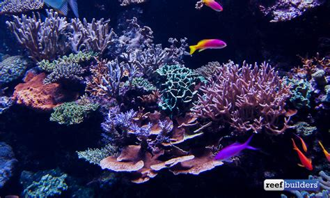 tank of s e a aquarium s reef display featured reefs marquee