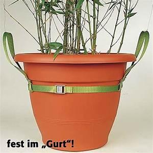 Tragehilfe Für Kübelpflanzen : k bel caddy f r pflanzenk bel online kaufen bei g rtner p tschke ~ Markanthonyermac.com Haus und Dekorationen