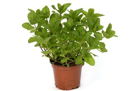 7 plantes pour attirer les 233 nergies positives