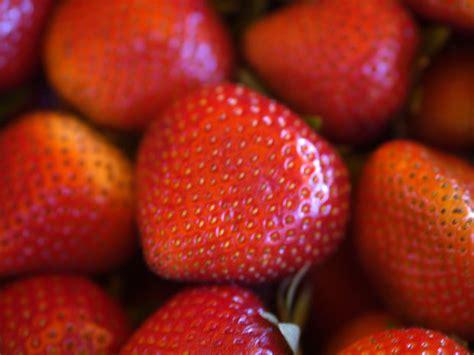 conseils sur la cultivation de fraises et comment apprendre a faire pousser des