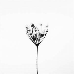 Schwarz Weiß Kontrast : kostenlose foto natur draussen schwarz und wei pflanze blume kraut kontrast schwarz ~ Markanthonyermac.com Haus und Dekorationen