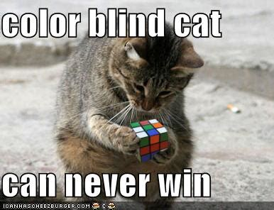 are cats color blind cat pictures on cats cat and kitty