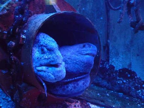 aquarium st malo photo de grand aquarium malo tripadvisor