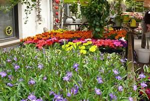 Garten Blumen Pflanzen : blumenpflanzen gitterseeflorist in dresden ~ Markanthonyermac.com Haus und Dekorationen