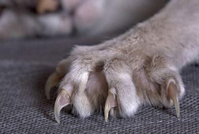 eviter chat griffe canape 28 images test 201 pour vous les prot 232 ge griffes sont ils une