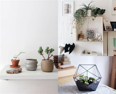 Best House Plant Decor Ideas