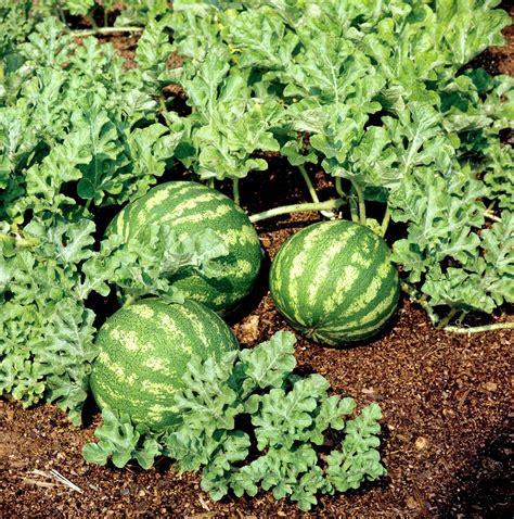 past 232 que planter et cultiver ooreka
