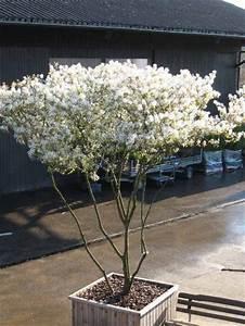 Baum Für Schattigen Vorgarten : die 25 besten ideen zu japanische sch nheit auf pinterest haarknoten ~ Markanthonyermac.com Haus und Dekorationen