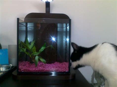 aquarium pour poisson combattant pas cher 224 voir