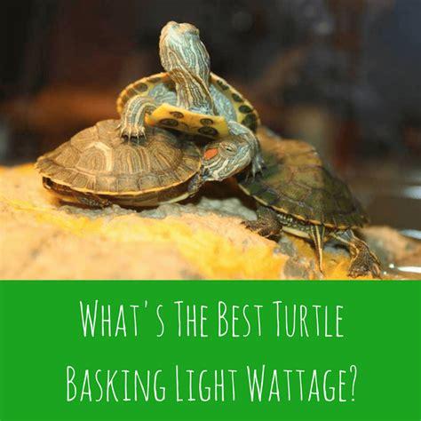what s the best turtle basking light wattage turtleholic