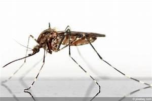 Mücken Im Haus Was Tun : m cken stechm cken am gartenteich was tun gegen m ckenlarven ~ Markanthonyermac.com Haus und Dekorationen