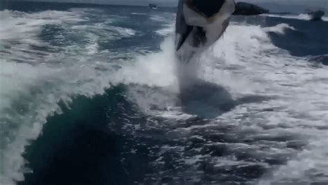 Youtube Film The Glass Bottom Boat by Watch A Bunch Of Killer Whales Chase A Boat Give A Couple