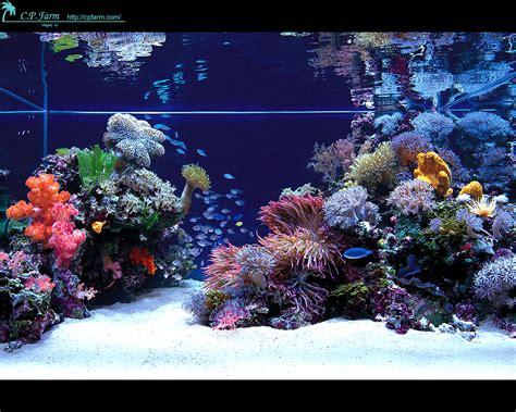 stunning japanese aquariums from cp farm