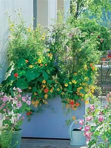Sichtschutz Pflanzen Blühend : deko ideen f r den landhausgarten mein sch ner garten ~ Markanthonyermac.com Haus und Dekorationen