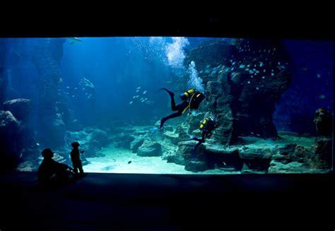 aquarium mare nostrum montpelli sequa
