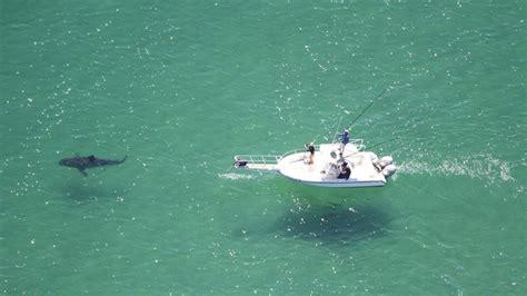 Jaws Cape Cod Beach Resort Offers Reallife Shark Adventures