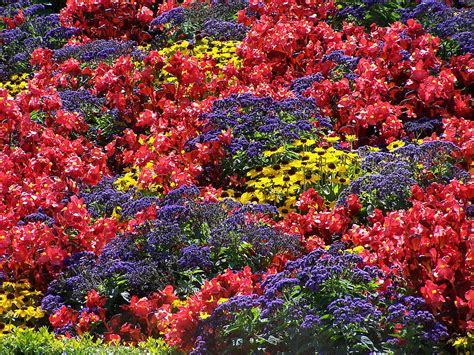 a flower bed displaying a variety of different coloured flowers
