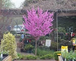 Dekorative Bäume Für Kleine Gärten : preview ~ Markanthonyermac.com Haus und Dekorationen