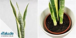 Große Zimmerpflanzen Pflegeleicht : pflanzen im schlafzimmer 14 gesunde zimmerpflanzen ~ Markanthonyermac.com Haus und Dekorationen
