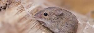 Mäuse Im Keller : m usebek mpfung protec sch dlingsbek mpfung ~ Markanthonyermac.com Haus und Dekorationen