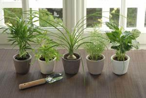 Pflegeleichte Zimmerpflanzen Mit Blüten : zimmerpflanzen ~ Markanthonyermac.com Haus und Dekorationen