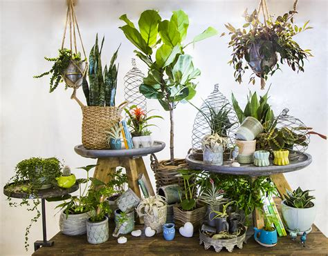 Houseplants For Low Light Rooms  Shelly Lighting