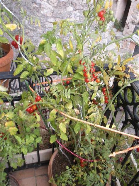 comment faire pousser des tomates cerises sur balcon