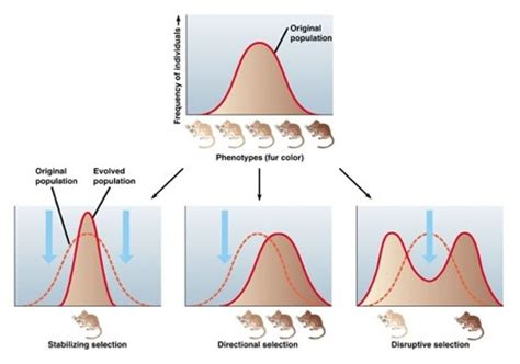 103 Gene Pools And Speciation  Slhl1 Biology (5) Ferguson