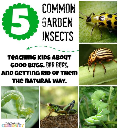 Teaching Children About Garden Bugs {and Natural Pesticide