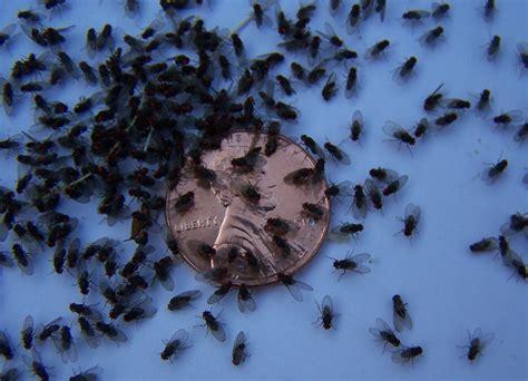 small flies in bathroom gen4congress