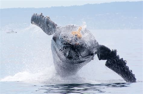 Monterey Whale Watching Boats by Frequently Asked Questions Blue Ocean Whale Watching