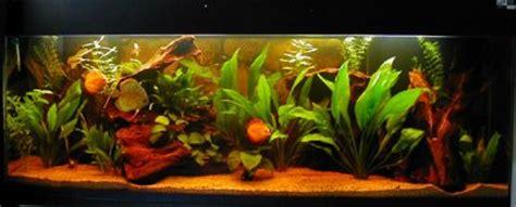 types de bac aquarium eau douce aquarium r 233 gional vie l aquariophilie d eau douce