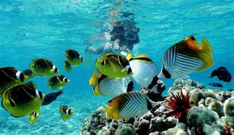 Catamaran Snorkeling Kona Hawaii by Snorkeling At Its Best Picture Of Body Glove Cruises