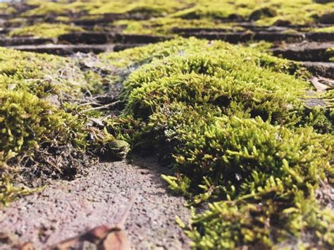 Moss Growing On Roof Clay Roof Tiles Supplier In Malaysia Flat Replacement Estimate Jomax Cleaner Lowes Solar Panel Car Rack Rsg Roofing Supply Orlando 230 Fifth Rooftop Garden Bar And Restaurant New York Superior Siding Nj Reviews Gas Torch For
