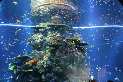 marine park sea aquarium picture of marine park sentosa island tripadvisor