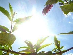 plantes en pot plein soleil article teamdemise