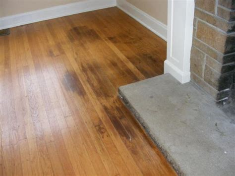 How To Clean Pet Urine From Wood Floors  Puppy Corner