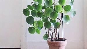 Große Zimmerpflanzen Pflegeleicht : diese zimmerpflanzen sind absolut pflegeleicht wohnen ~ Markanthonyermac.com Haus und Dekorationen