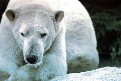 zoo d amn 201 ville 57360 amneville les thermes nature incontournable famille activit 233 sportive