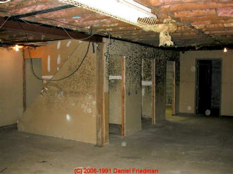 How To Find & Test For Mold In Basements Laminate Flooring Laying Pattern Colour Choices Lakeland Fl Door Threshold Bnq Polishing Floors Aberdeen Spotted Gum