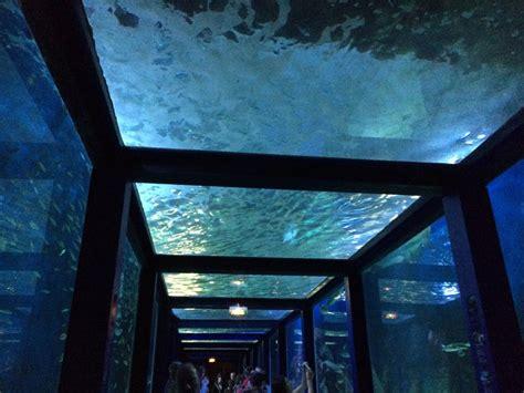 aquarium du grau du roi 28 images murene a l aquarium du grau du roi aquatique animal fond