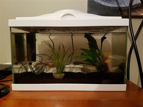 quel sont les basiques de l entretien d un aquarium d eau douce froide