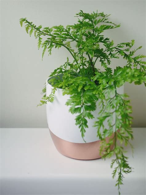diy copper white plant pot fern for bathroom vase
