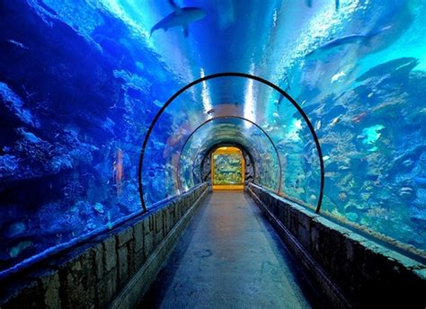 le plus grand aquarium du pays bient 244 t ouvert a j 233 rusalem