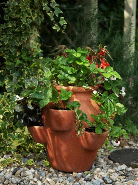 growing alpines in pots 28 images grow succulent alpines in pots gardenersworld alpine