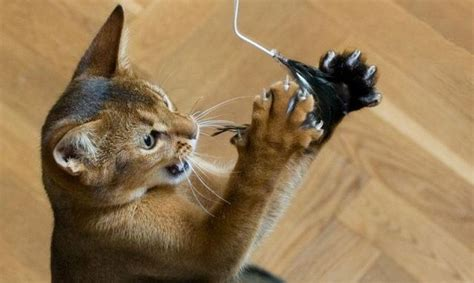 jeux pour chats cinq id 233 es pour les fabriquer soi m 234 me animogen