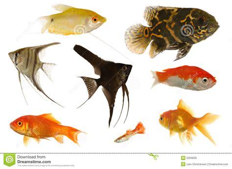 poissons d aquarium photo stock image du assorti aqua 5294636