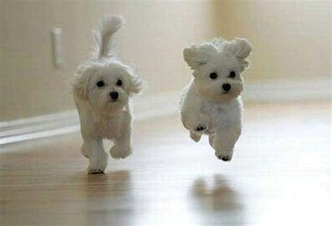 Two Dogs Photo, Happy Dogs Photo, Flying Dogs Photo   INTERNET PHOTOS