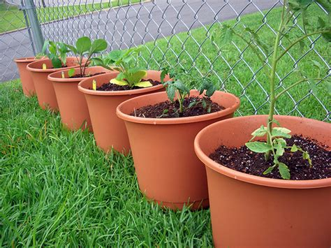 Container Vegetable Garden  Containers Container